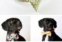 Köpek Aksesuarları