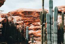 OJAS Desert Daze