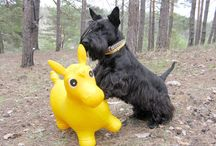 Scottish Terrier / International Dog's Personal Websites Catalogue