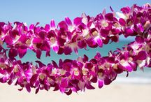 Havaí oahu