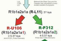 R1b-L11 / R1b-L11