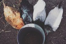 Farm Family / Get to know the current and future residents of KaMa Heights Farm