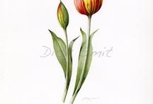 Botanisch tekenen en aquarelleren