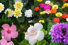 fiori in pieno sole