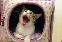 Cats - Esses Gatos... / Esses gatos...