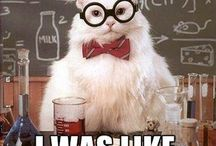 Chemistry Jokes / by Kristina Nicole