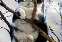 Something catsy