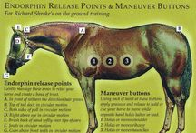 Horse anatomy and physiology