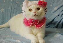 Cats :)