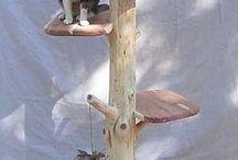Δέντρα Για Γάτες
