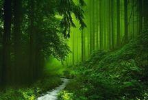 Natur / Bilder unserer wunderschönen Natur