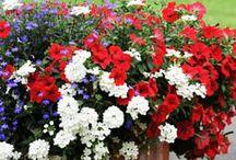 Jardinière fleurie - Prêt à pousser / Pour être sûr d'obtenir des potées, des suspensions ou des vasques équilibrées et harmonieuses, rien de plus simple ! Adoptez les compositions toutes prêtes !