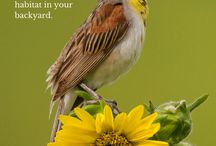 Gardening for Birds / Bring lots of different types of birds into your yard with the right plants and flowers!