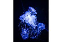 Láminas decorativas - Lara Ramírez / Láminas decorativas de artistas emergentes. Ilustraciones y fotografías Fine Art de alta calidad, impresas en papeles 100% algodón.