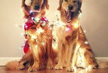 Chirstmas animals