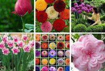 Amazing flowers-Garden Design/Landscaping