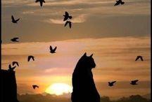 Cats &Wild Cats