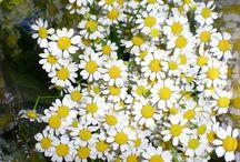 Las flores y sus nombres :) / Aprendiendo sobre floristería