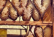 Pszczoły & Miód / Bees & Honey