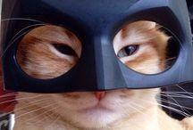 коты крутаны