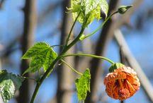 Mis Fotos de la Primavera