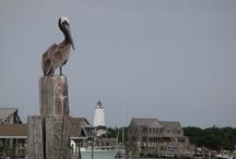 Pelicans / by An'gel Ducote