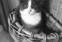 Cats / Kute kitties