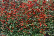 Kleur planten struiken tuin