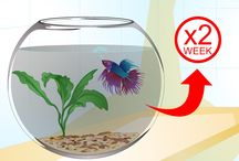 PETS {fish colouring up my house}