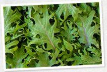 Baby Kale Recipes