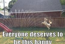 Animals are awesome