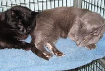 #DC area pets for adoption / by Bethe Almeras