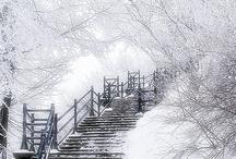 Winter Wonderland / by Judy Ausink
