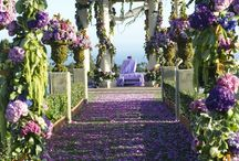 Indian Weddings / by Toni Chandler Flowers & Events