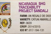 NICARAGUA SHG Black honey - Un Regalo De Dios / Káva se suší společně s dužinou - black honey procesem - déle, až 30 dní, na slunci na lůžkách. Tato metoda zpracování kávy je více pracná a nákladná, ale vyplatí se čekat! Káva tím totiž získává komplexní, bohaté tělo, je více nasládlá a má výraznou vůni. Naše Nicaragua SHG má střední aciditu, s nádechem brusinek a malin, v dochuti je cítit kakao, květový med a slivky. Určitě stojí za ochutnání!