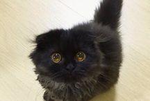 Котики / Самые милые котики!!! The kittens is cutes!!!