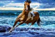 Animal Kingdom :*
