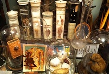 Obsessions / I have an unhealthy obsession with bones, skulls, taxidermy, antique bottles, and oddities.