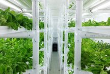 Hydroponic Gardening In A Container