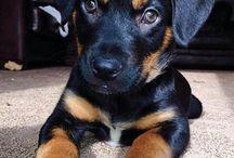 cute as pups :)