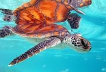 Sea Turtles..;) / by Laura Schuckman