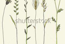 растительные рисунки