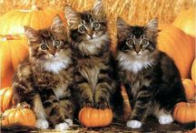 tapety z kotami!