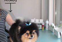 PELUQUERÍA CANINA DOG'S AFFAIRE / Nueva peluquería Canina en Alicante. Av. Condomina 42, local 20. Frente al colegio El Valle. Teléono 966 592 772, llama ya y pide cite