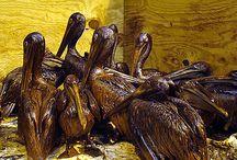 Environmental Effects of Oil Spills