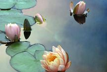 Inspiration | Painting, Water Lilies