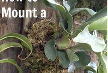 Staghorn Fern Mounting Ideas / Unique ways to mount staghorn ferns!