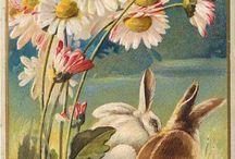 Pasqua Vintage