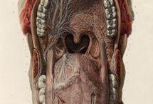 Medical Ilustration