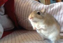 I love my gerbil !!! / Squeak, the best gerbil alive !
